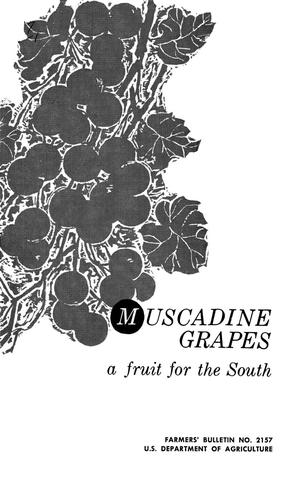 Primary view of object titled 'Muscadine Grapes: A Fruit for the South'.