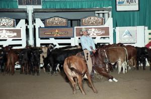 Primary view of object titled 'Cutting Horse Competition: Image 1997_D-106_20'.