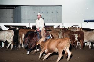 Primary view of object titled 'Cutting Horse Competition: Image 1997_D-17_08'.