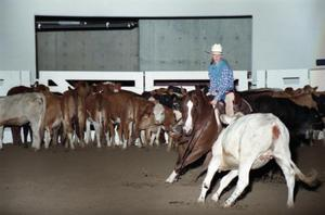 Primary view of object titled 'Cutting Horse Competition: Image 1997_D-2_08'.