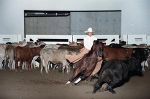 Primary view of object titled 'Cutting Horse Competition: Image 1997_D-3_11'.