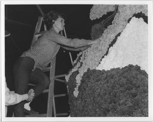 Primary view of object titled '[Student constructing North Texas Homecoming float, 1964]'.