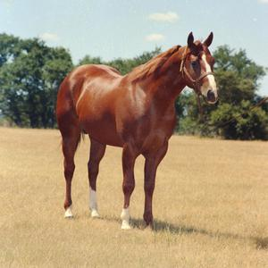 Primary view of object titled '[Horse on Mike Rutherford's Ranch]'.