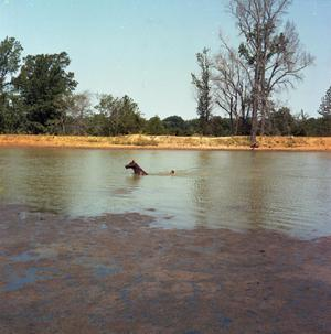 Primary view of object titled '[John Carle Carter Swimming With Horse]'.