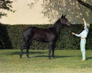 Primary view of object titled '[Child and Horse on Fair Park Lawn]'.