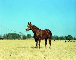Primary view of object titled '[Horse in a Field]'.