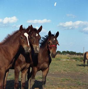 Primary view of object titled '[Three Young Horses]'.