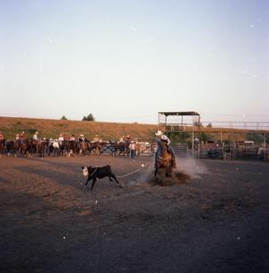Primary view of object titled '[Man Roping Calf at NTCHA Finals]'.