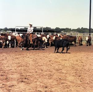 Primary view of object titled '[Jim Reno on Horse with Cows]'.