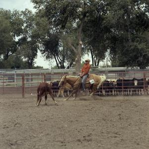 Primary view of object titled '[Man in Cow Pen at Colorado State Fair]'.
