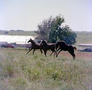 Primary view of object titled '[Three Horses on the Ranch of Marion Mauldin]'.