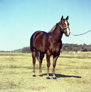 Primary view of object titled '[Horse Owned by Jim McKay]'.