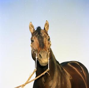 Primary view of object titled '[Horse on Dub Dale Ranch]'.