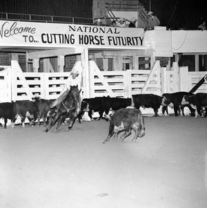 Primary view of object titled '[National Cutting Horse Futurity]'.