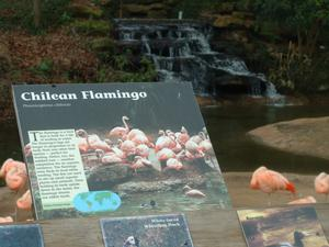 Primary view of object titled '[Flamingo exhibit]'.