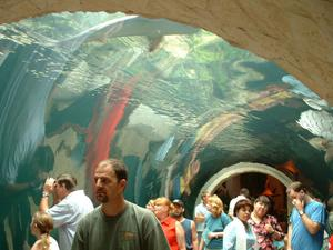 Primary view of object titled '[Visitors walk in a glass tunnel through the Aquarium]'.
