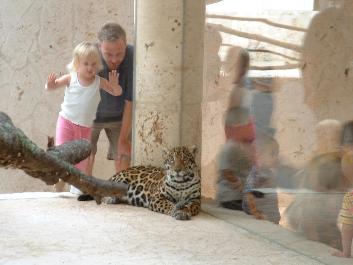 [Jaguar looks at the photographer while tourists look on]                                                                                                      [Sequence #]: 1 of 1