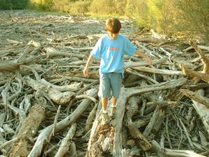 Primary view of object titled '[Boy walking on a log in a pile of brush]'.