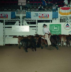 Primary view of object titled 'Cutting Horse Competition: Image 1991_D-95_01'.